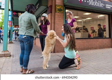 Chicago, IL, August 5, 2017: A girl stops to meet a cute, fluffy dog on the street in Chinatown. Chinatown is a popular and family friendly neighborhood that attracts many visitors daily in Chicago.