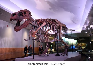 Chicago, IL February 18, 2019, Sue the most complete Tyrannosaurus Rex T-Rex dinosaur fossil skeleton in the world on display at the Field Museum