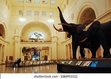 Chicago, IL, USA April 7, 2008 An elephant display and Sue, the most complete T Rex discovered, are on display in the Main Room of the Field Museum of Natural History in Chicago