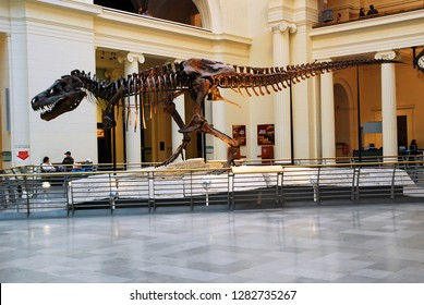 Chicago, IL, USA April 7, 2008 Sue, the most complete T Rex ever unearthed, is on display at the Field Museum in Chicago