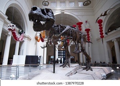 Chicago, Illinois, USA - 2019: A dinosaur skeleton at the Field Museum of Natural History, one of the largest in the world, located at 1400 S. Lake Shore Drive.