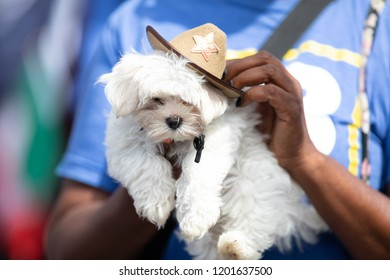 Chicago, Illinois , USA - September 9, 2018 The 26th Street Mexican Independence Parade, small white pet dog wearing a cowboy hat being holded up by owner