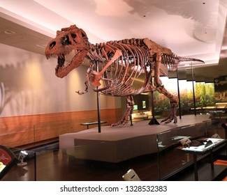 CHICAGO, IL/USA - MARCH 3, 2019:  The new exhibit at Chicago's Field Museum of Sue, the famous tyrannosaurus.