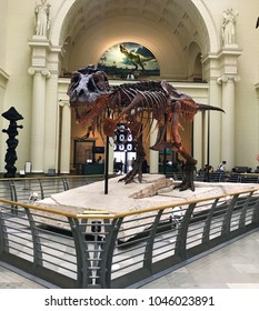 Chicago - May 13, 2017  Sue the Dinosaur at the Field Museum of Natural History in Chicago is the most complete T-Rex fossil discovered.
