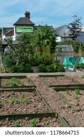 Chichester, Sussex / UK - 4 August 2018: A local Co-op Food Store sits behind a group of community allotments; the green Co-op sign is visible above vegetables growing in the wooden frames.