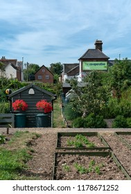 Chichester, Sussex / UK - 4 August 2018: A local Co-op Food Store sits behind a group of community allotments; the green Co-op sign is visible above vegetables, red hanging baskets and a shed.