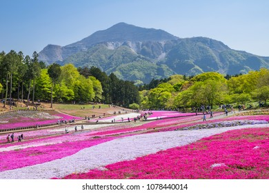 "CHICHIBU CITY, SAITAMA / JAPAN - APRIL 20 2018 : The landscape of ""Hitsujiyama park"" where Moss Phlox blooms all over. From April to May, the hills are filled with pink and white flowers."