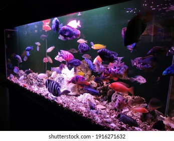 Chichlid in an aquarium with hardscape