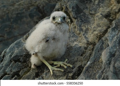 chick eagle sitting on a rock.