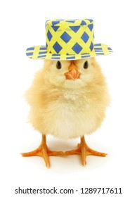 Chick with funny hat