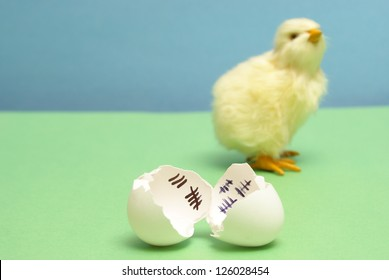 A chick has been counting the days to his release as a hatchling.