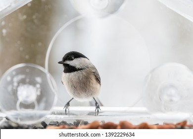 Chickadee bird perched on plastic glass window feeder perch looking during snow in Virginia