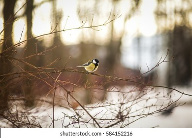 chickadee on a branch in the forest