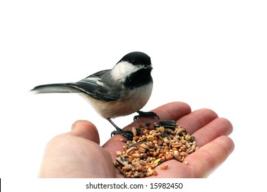 Chickadee on a hand isolated on white