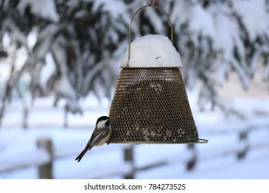 Chickadee on Winter Feeder