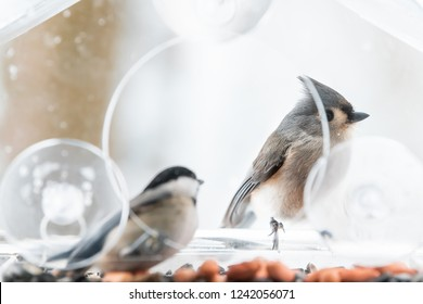 Chickadee and tufted titmouse, two birds together, one perched on plastic window bird feeder perch, inside on suction cups with sunflower seeds, peanut nut, during snow, snowing, Virginia