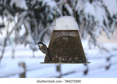 Chickadee Winter Bird
