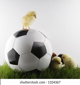 chicken and ball