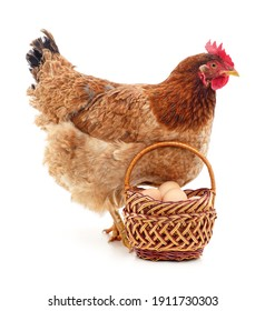 Chicken and a basket with eggs isolated on a white background.