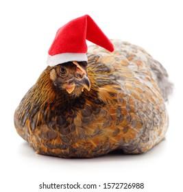 彡 [Cadeautopic] Secret Santa 2019 Chicken-christmas-hat-isolated-on-260nw-1572726988