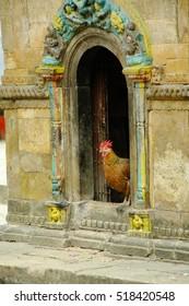 A chicken coming out of an hindu temple near Kathmandu