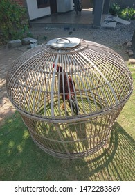 chicken coops model from indonesia, roosters and chicken coops
