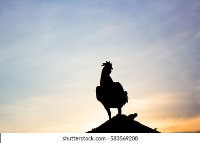 Chicken crow in morning of the day