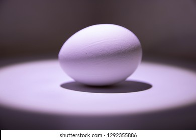 Chicken egg half lightened with shadow under it in light circle on grey background