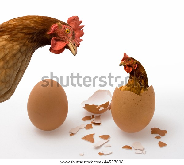 Chicken or Egg on White, Philosophy Question, Who Was the First. Idea of Philosophical Dilemma