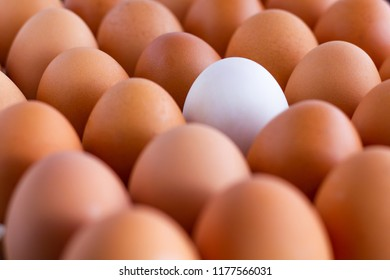 Chicken eggs and a duck egg.