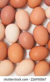 chicken eggs on a white background