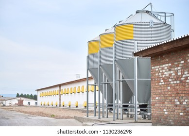 chicken farm with a feed silo tank. Silos for a chicken farm. Agricultural tank for the storage of feed. hree grain bins on an chicken ranch.