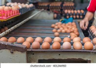 Chicken Farm Machine, production line process