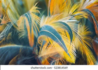 Chicken feather texture background