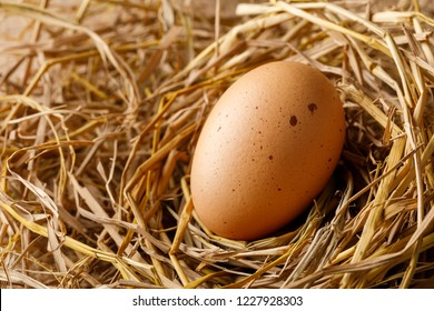 Chicken or hen egg on straw nest, organic food fresh from poultry farm