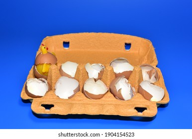 Chicken in a hen's egg among the broken empty eggs in a paperboard on blue background. Broken egg and born chick. Сhicks ran away from the chicken mother. Farming and agriculture concept.