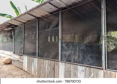 Chicken house is a wooden structure with metal mesh door, chicken cage