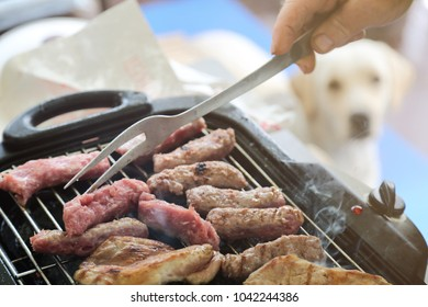 Chicken meat and sausages grilling on the barbecue while hungry dog is watching.