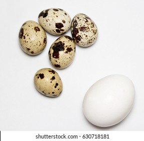 chicken and quail eggs on white background