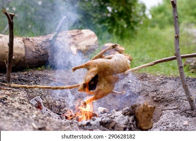 Chicken Roasting on Make Shift Stick Rotisserie Over Open Camp Fire in Wilderness Setting