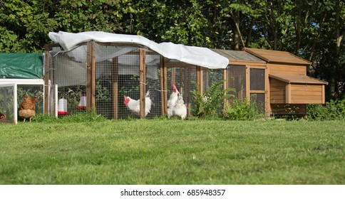 Chicken run in domestic garden