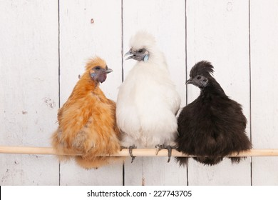 chickens in henhouse on stick