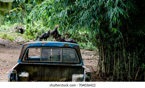 Chickens are on a car in a hill village.
