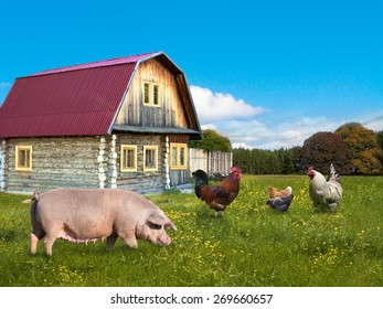 Chickens and  pig on the rural landscape background