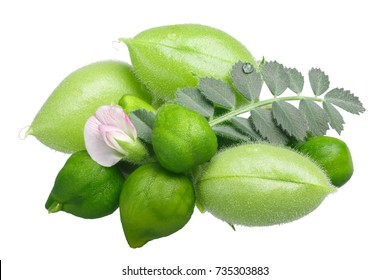Chickpea (Cicer arietinum), Desi variety, green pods, leaves, flower and beans. Clipping path