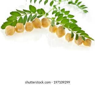 Chickpea plant with seed  isolated on white background