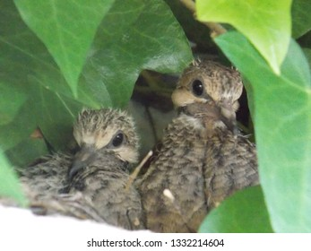 Chicks of the nest under the roof of the house.