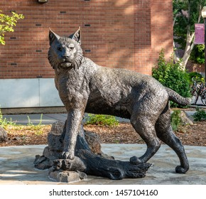 """Chico, California - July 9, 2019: A bronze statue of their mascot, the Wildcats, is displayed in front of California State University Chico (""""Cal State Chico"""").  It is a replica of the local bobcat."""