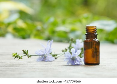 chicory oil container with chicory flowers on wooden and greenery background