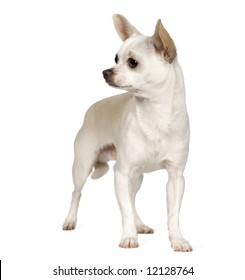 Chihuahua (9 months) in front of a white background